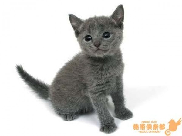 プリッツ CM 猫 種類 女性 名前